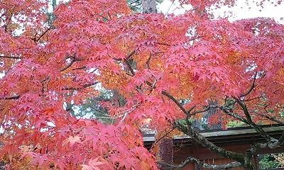 今宮神社の紅葉