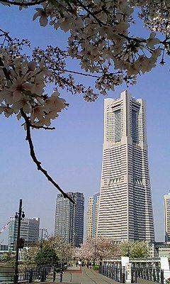 桜の向こうに・・・