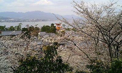 桜と鳥居と海