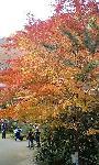 西明寺の紅葉1