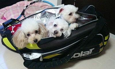 テニスバッグの中に・・・